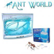 ant world